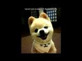 «Шунсуке – Шунсуке – самый очаровательный пес Японии.» под музыку ♥ Justin Biber - Love me ( New 2011)  ♥. Picrolla